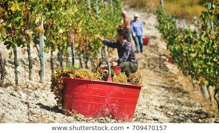 vino · fabricante · mujer · hombre · frutas · de · trabajo - foto stock © photography33
