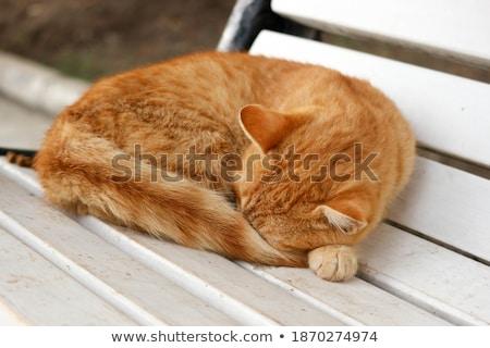 кошек кошки дизайна модель фон Сток-фото © photography33