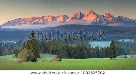 гор · Польша · живописный · пейзаж · простой - Сток-фото © mironovak
