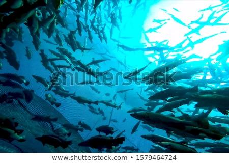 Aquático fazenda lago luz do sol água peixe Foto stock © raywoo