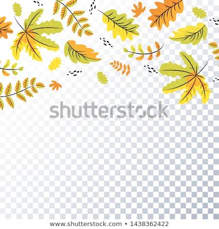 branche · montagnes · Pologne · nature · vert · rouge - photo stock © lianem