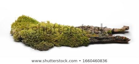 Mos boom groene zon natuur Stockfoto © Kayco