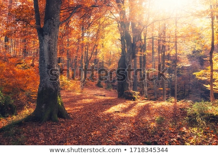 landscape with autumnal forest in fog stock photo © phbcz