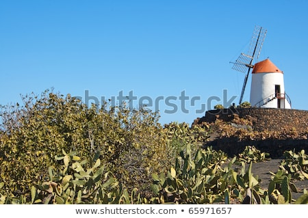 typical windmill in lanzarote canary islands spain stock photo © meinzahn