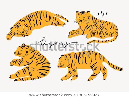 Aranyos tigris alszik illusztráció narancs éjszaka Stock fotó © Dazdraperma