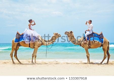 Házasság tevék illusztráció szeretet természet pár Stock fotó © adrenalina