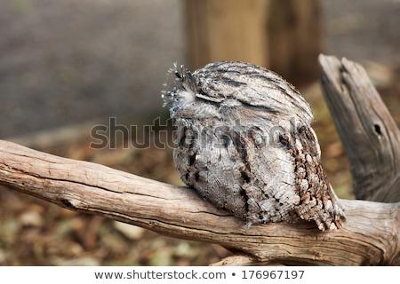 Kettő kút ül faág sziget tó Stock fotó © dirkr