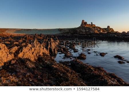 Hínár fedett kövek kastély sziklák tengerpart Stock fotó © morrbyte