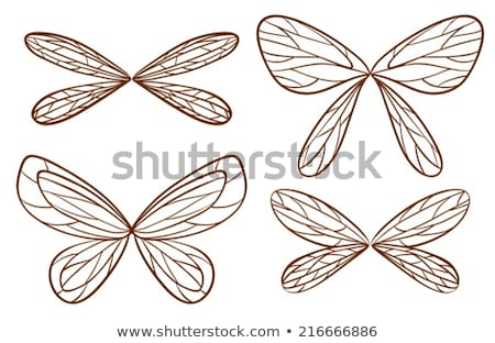 Simple sketches of fairy wings Stock photo © bluering