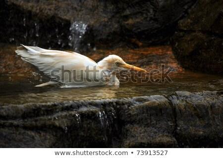 Klein witte ooievaar waterval zachte licht Stockfoto © shutter5