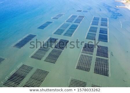 barco · alga · fazenda · barcos · oceano · pôr · do · sol - foto stock © raywoo