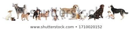 犬 異なる シルエット 白 コレクション ストックフォト © liolle