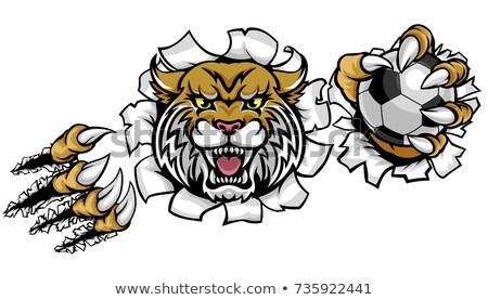 Lion Holding Soccer Ball Breaking Background Stock photo © Krisdog