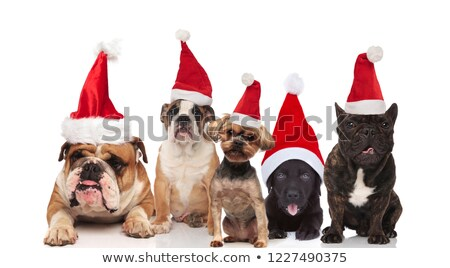 team of five cute santa dogs of different breeds stock photo © feedough