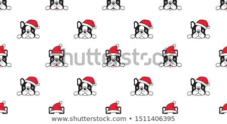Pet Dog in Christmas Santa Claus Hat and Gift Bone Stock photo © Krisdog