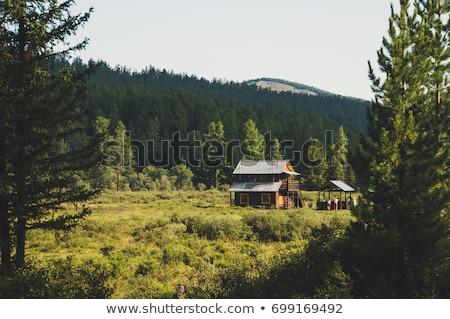 cabaña · nieve · campo · ilustración · casa - foto stock © colematt