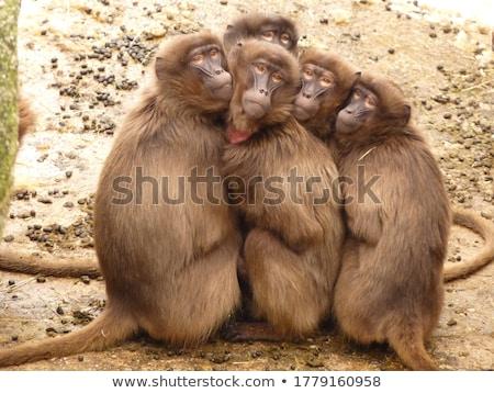 пять обезьяны джунгли иллюстрация древесины школы Сток-фото © colematt