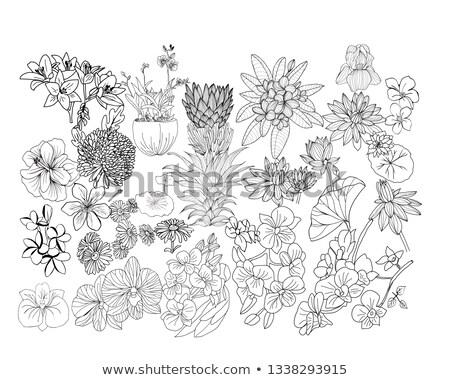 kézzel · rajzolt · növénytan · szett · virágok · levelek · vektor - stock fotó © margolana