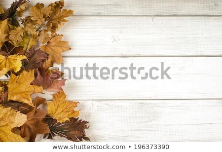 csoport · elegáns · őszi · levelek · illusztráció · köteg · erdő - stock fotó © Blue_daemon