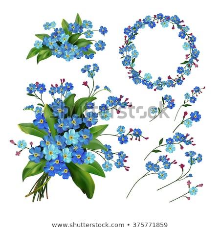 witte · Blauw · zomerbloemen · boeket · vintage - stockfoto © odina222