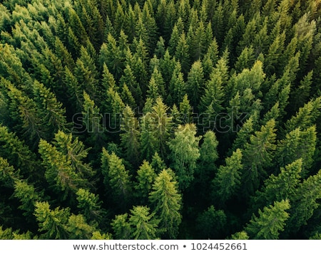 Forest trees. Aerial view from the drone of a green forest on a sunny summer day. Top view Stock photo © artjazz