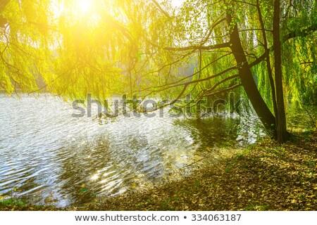 ağaçlar · yansıma · yapraksız · kış · nehir · dere - stok fotoğraf © kzenon
