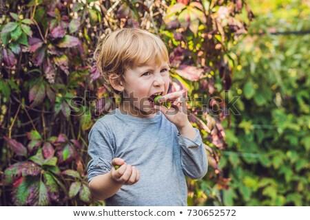 New Zealand exotic food. Berry nergi, or small kiwi. Child picking Green baby kiwi fruit actinidia a Stock photo © galitskaya