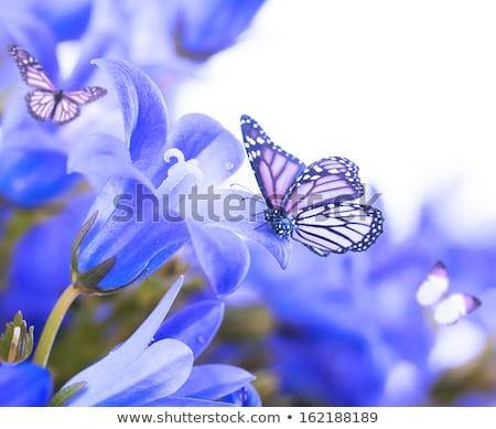 Molhado azul flores gotas de água verde campo Foto stock © vapi