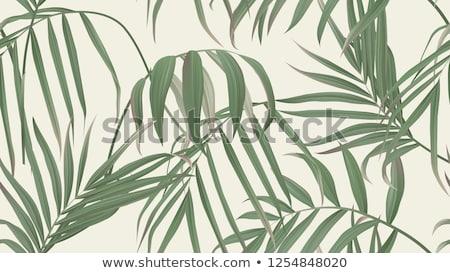 wektora · bezszwowy · bambusa · tapety · tekstury · drzewo - zdjęcia stock © lordalea