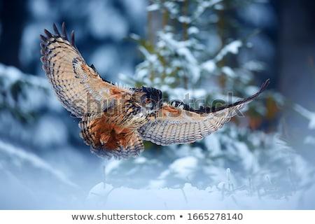 совы атаковать Flying птица орел молятся Сток-фото © Alvinge