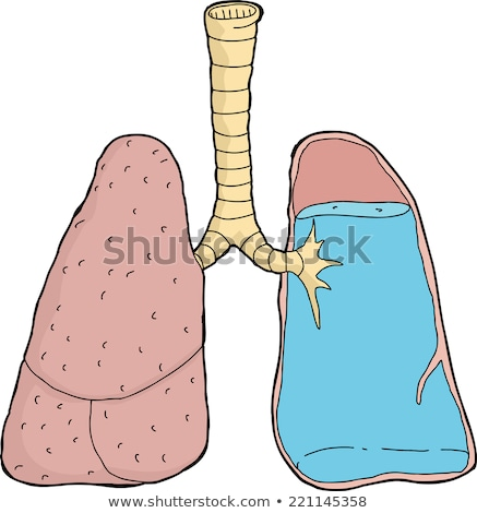 Stock fotó: Human Full Respiratory System Cross Section