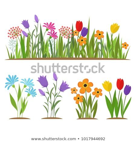 Zöld fű virágok szett izolált fehér fű Stock fotó © adamson