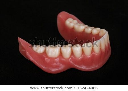 снизить · челюсть · человека · белый · модель · зубов - Сток-фото © elenarts