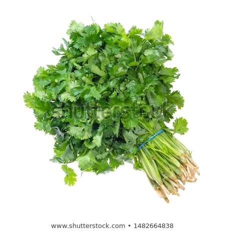 Fresh bunch of coriander Stock photo © calvste