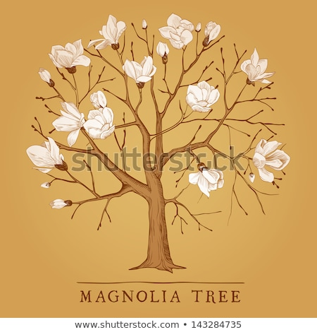 Magnolia tree flowers 1 Stock photo © Artlover