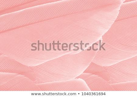 abstract · kleurrijk · vleugels · witte · achtergrond · vogels - stockfoto © smithore