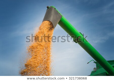 Harvester unloads harvested corn stock photo © deyangeorgiev