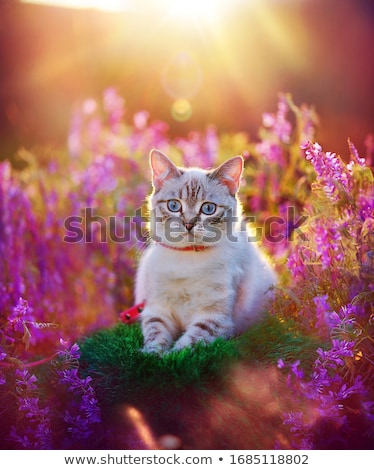 gatitos · aire · libre · la · luz · natural · cute · pequeño · verde - foto stock © tobkatrina