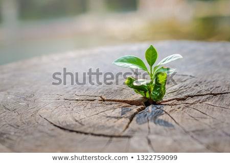 speranza · vita · guarigione · foglia · verde · albero - foto d'archivio © lightsource