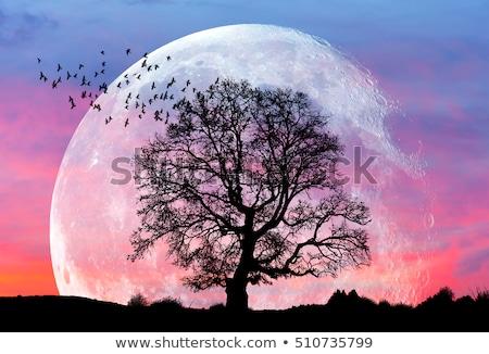 Super Moon Rising Stock photo © suerob