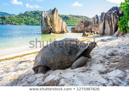 Gigant żółw portret para twarz Zdjęcia stock © Kirill_M