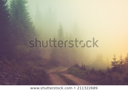 Plin de noroi pădure cale natură abstract iarnă Imagine de stoc © sirylok