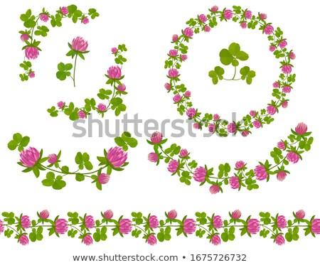 клевера цветочный Элементы зеленый декоративный Сток-фото © Ansy