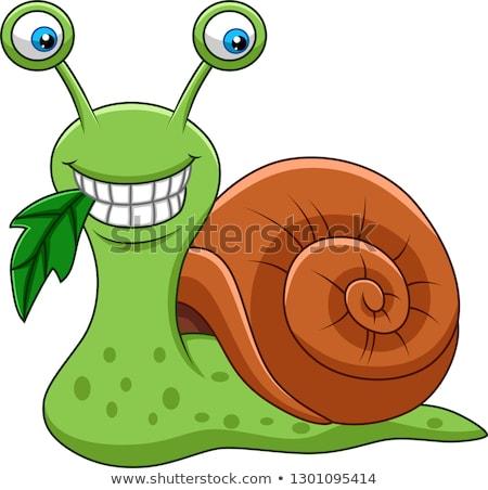 sorridente · caracol · desenho · animado · sorrir · natureza · verde - foto stock © anbuch