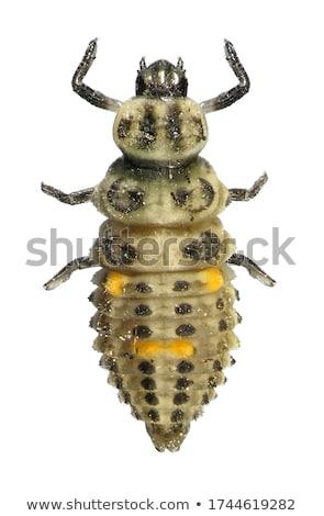 てんとう虫 · 女性 · 牛 · その他 · オレンジ · 緑 - ストックフォト © danielbarquero