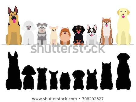 Cartoon psa sylwetka kolekcja jamnik oryginał Zdjęcia stock © tiKkraf69