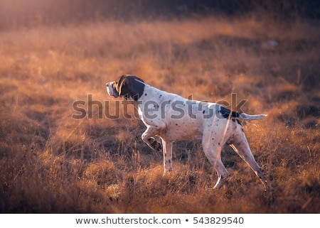 Cão de caça caçador floresta cão pernas veado Foto stock © phbcz