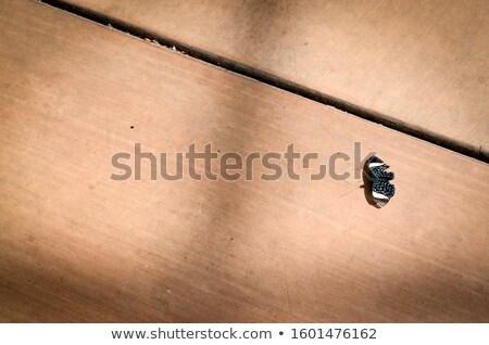 Kahverengi kelebek kanat tropikal orman Stok fotoğraf © Mps197