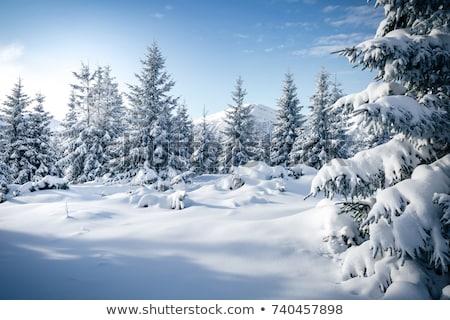Arbres bois couvert gel soleil nature Photo stock © bendzhik