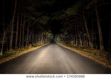 karanlık · yol · orman · yürüyüş · iz · ahşap - stok fotoğraf © Niciak
